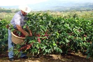 Kostaryka kawa