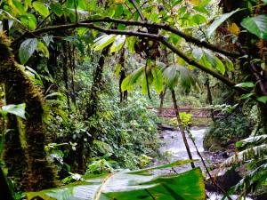 Kostaryka - lasy mgliste